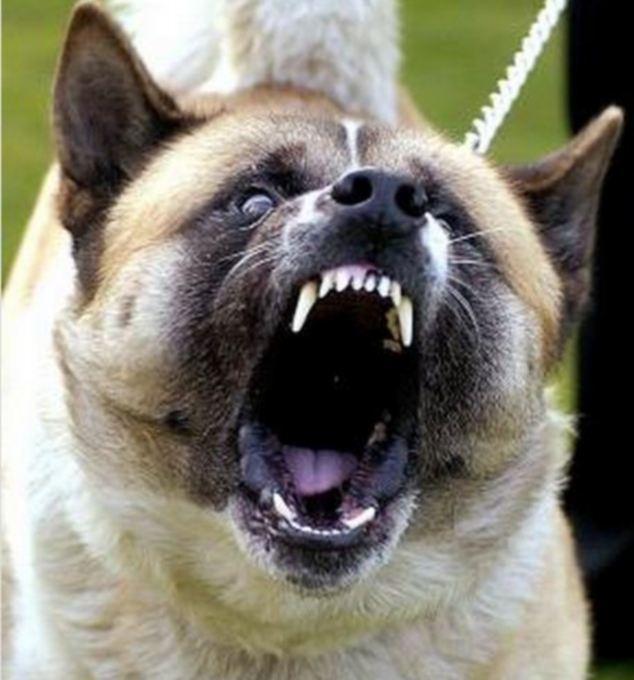 Compensation for victim of dog bite attack